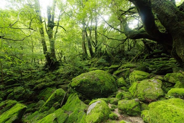 屋久島における登山ツアーの魅力